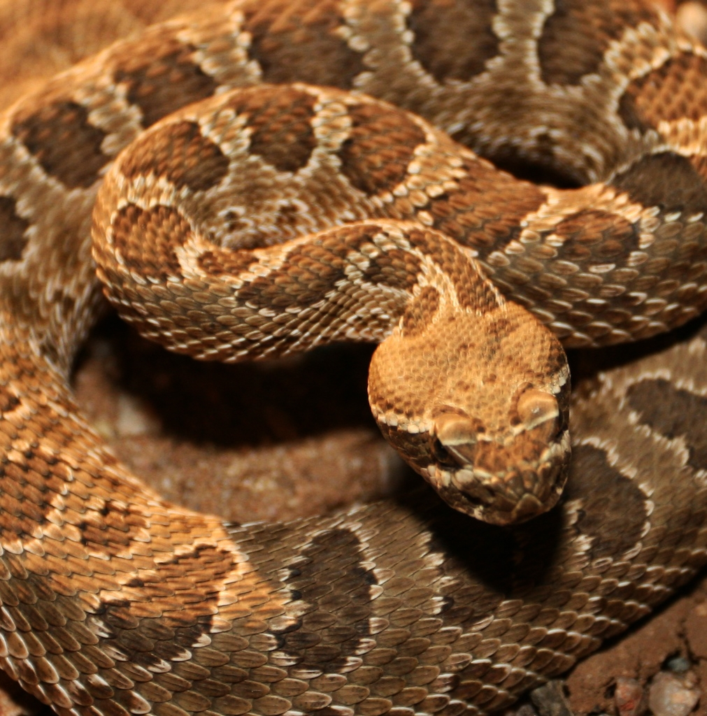 snake venom A viper's venom would usually be something to steer clear of if you're at all  concerned with your health, but new research suggests it may in fact.